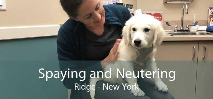 Spaying and Neutering Ridge - New York