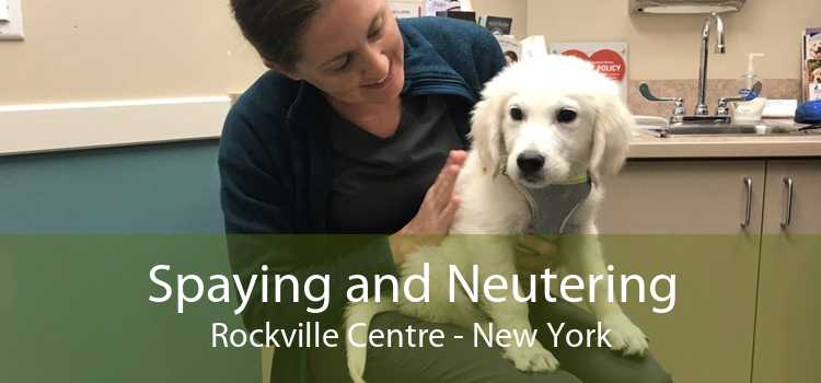 Spaying and Neutering Rockville Centre - New York