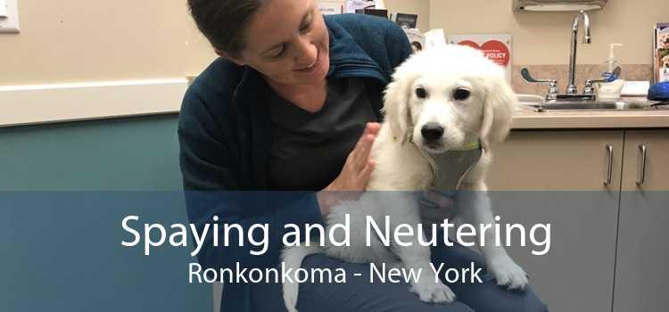 Spaying and Neutering Ronkonkoma - New York