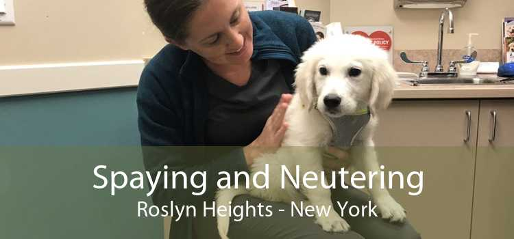 Spaying and Neutering Roslyn Heights - New York
