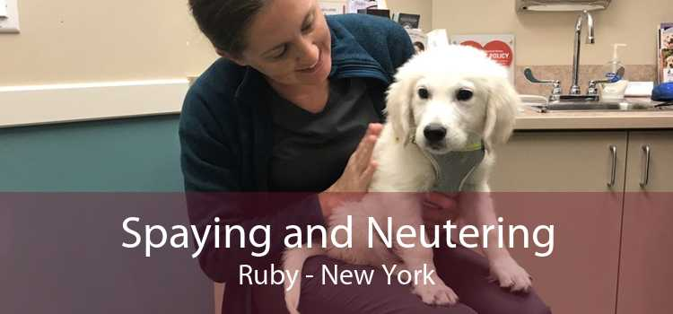 Spaying and Neutering Ruby - New York
