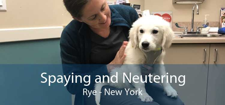 Spaying and Neutering Rye - New York