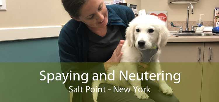 Spaying and Neutering Salt Point - New York