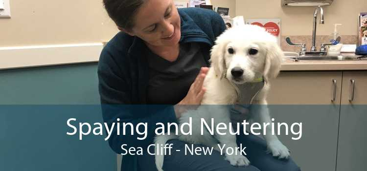 Spaying and Neutering Sea Cliff - New York