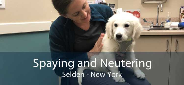 Spaying and Neutering Selden - New York