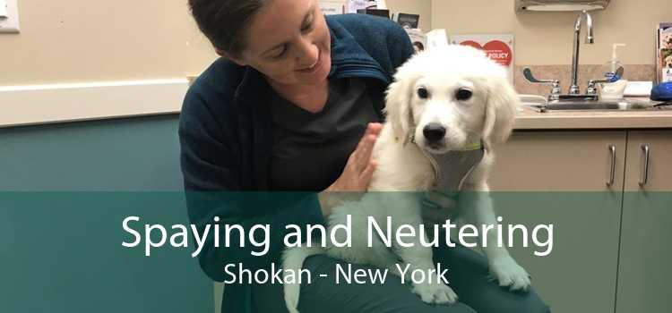 Spaying and Neutering Shokan - New York