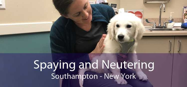 Spaying and Neutering Southampton - New York
