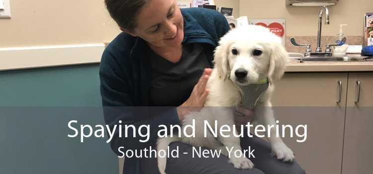 Spaying and Neutering Southold - New York