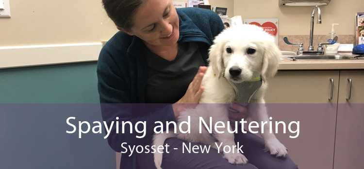 Spaying and Neutering Syosset - New York