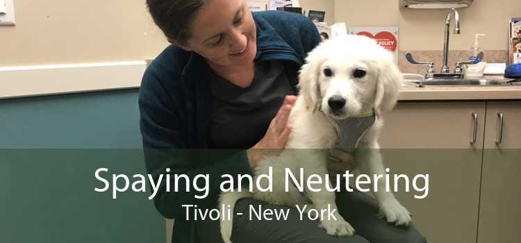 Spaying and Neutering Tivoli - New York
