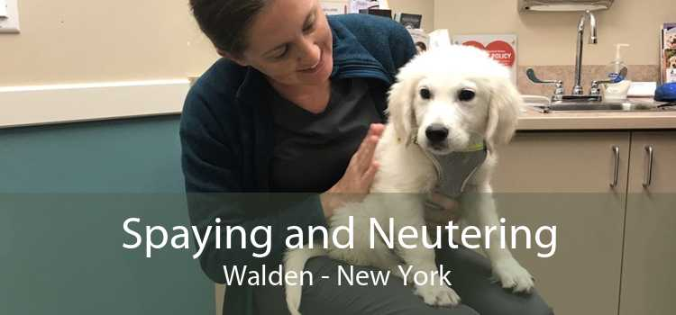 Spaying and Neutering Walden - New York