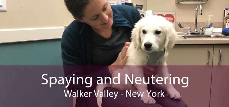 Spaying and Neutering Walker Valley - New York