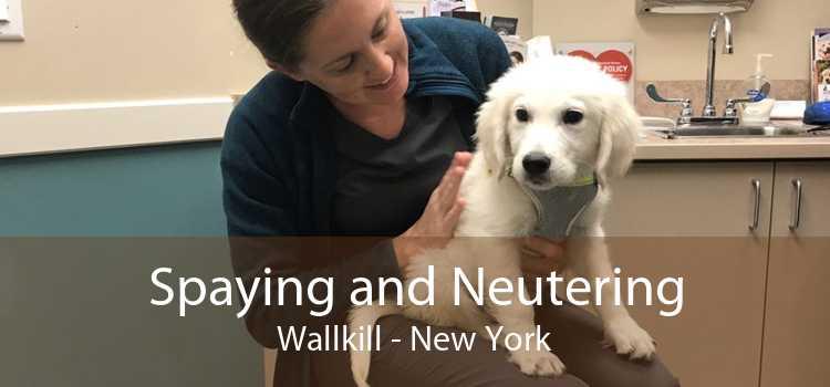 Spaying and Neutering Wallkill - New York