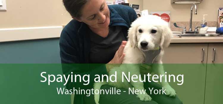 Spaying and Neutering Washingtonville - New York