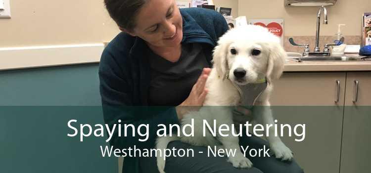 Spaying and Neutering Westhampton - New York
