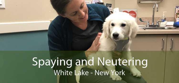 Spaying and Neutering White Lake - New York