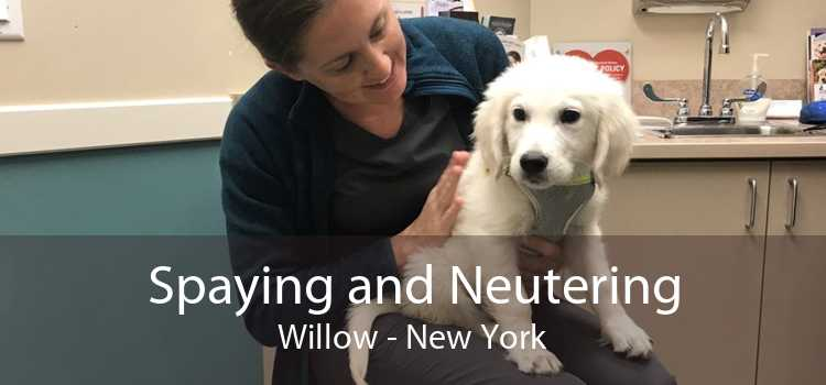 Spaying and Neutering Willow - New York