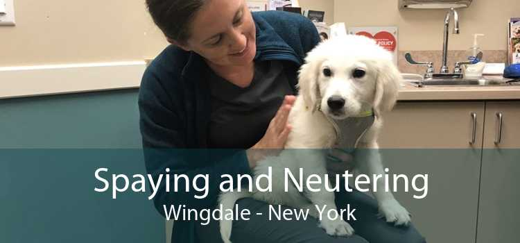 Spaying and Neutering Wingdale - New York