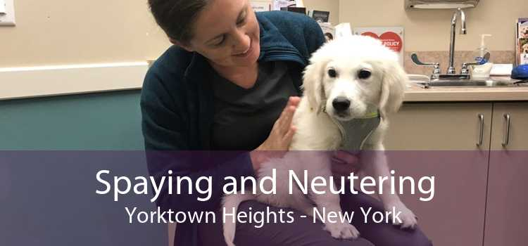 Spaying and Neutering Yorktown Heights - New York