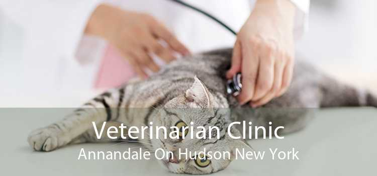 Veterinarian Clinic Annandale On Hudson New York