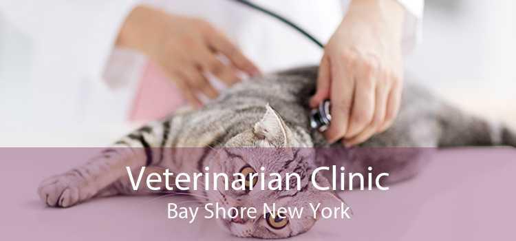 Veterinarian Clinic Bay Shore New York