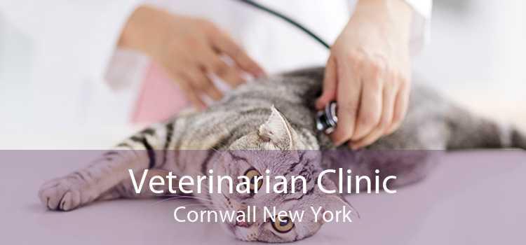 Veterinarian Clinic Cornwall New York