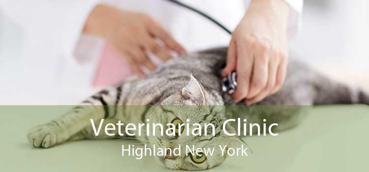 Veterinarian Clinic Highland New York