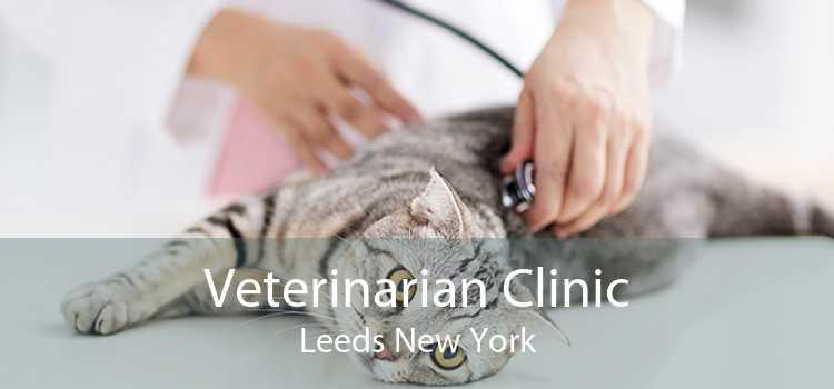 Veterinarian Clinic Leeds New York