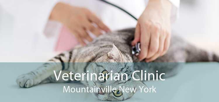 Veterinarian Clinic Mountainville New York