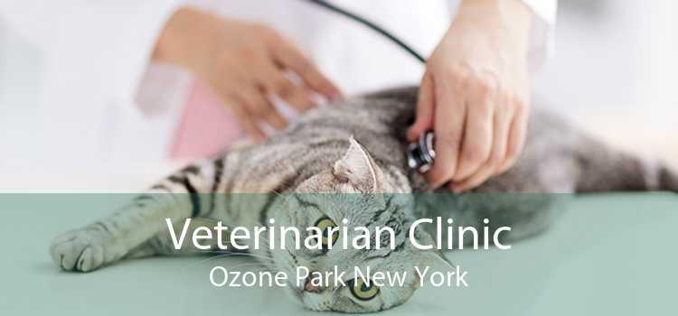 Veterinarian Clinic Ozone Park New York