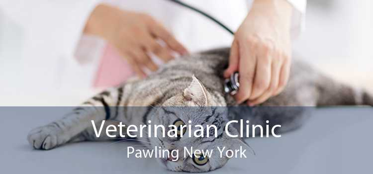 Veterinarian Clinic Pawling New York
