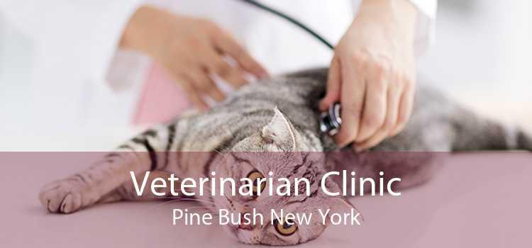 Veterinarian Clinic Pine Bush New York