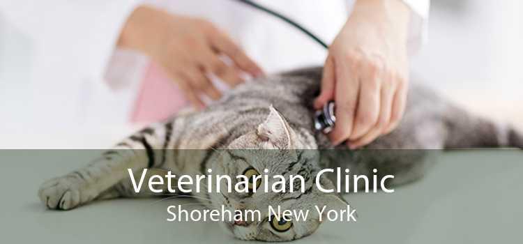 Veterinarian Clinic Shoreham New York