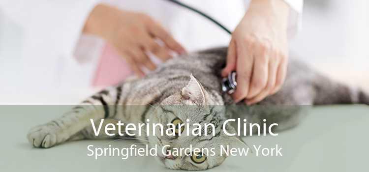 Veterinarian Clinic Springfield Gardens New York