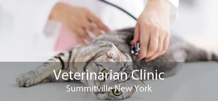 Veterinarian Clinic Summitville New York
